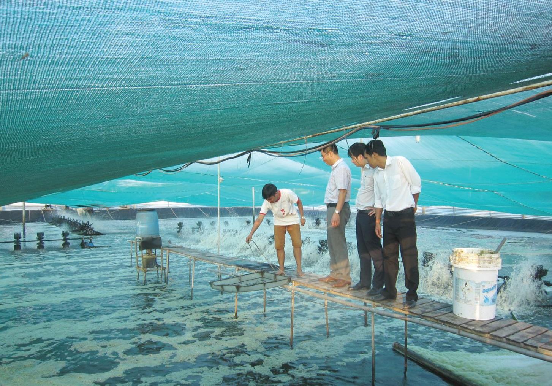 Áp dụng khoa học công nghệ trong quy trình nuôi giống cá, tôm